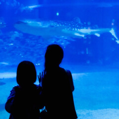 ジンベイ鮫/海遊館/海の世界/真っ青/沢山の魚 ジンベイ鮫でっかいなぁ!! はじめての水…(1枚目)