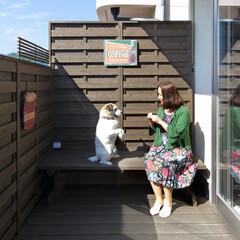 LIXIL/リクシル/エクステリア/バルコニー/犬のいる生活/犬のいる暮らし/... ♪バルコニーの施工事例♪⠀ バルコニーの…