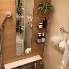 フェイクグリーン/浴室・風呂/雑貨/100均/ダイソー/インテリア/... バスルームはリラックスできるように落ち着…