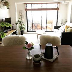 IKEA/ムートン/観葉植物/インテリア/リミアな暮らし/花のある暮らし/... こんばんは🌛 我が家の観葉植物について …