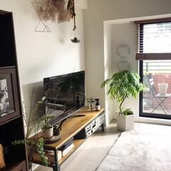 枝物/信楽焼/ラグ/ベルメゾン/グリーンのある暮らし/テレビ台/... テレビ周りに観葉植物を置いています。 エ…(1枚目)