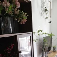 インテリア/雑貨/住まい/暮らし/リビング/植物/... 家の中がワサワサもりもりになってきてます…