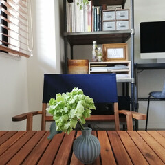 コクヨ 個別フォルダー カラー・PP製 A4 グレー 5冊パック A4-IFH-M | コクヨ(マガジンラック)を使ったクチコミ「我が家で育ててる紫陽花。 植木鉢で育てる…」