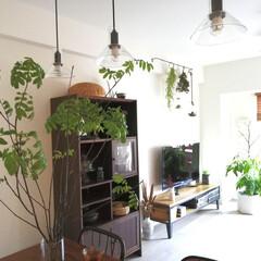 SALUS 竹かご L(その他キッチンツール)を使ったクチコミ「枝ものは欠かさず置いています。 またまた…」