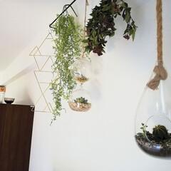 SALUS 竹かご L(その他キッチンツール)を使ったクチコミ「ここからみるとガラスドームが夏って感じで…」(1枚目)