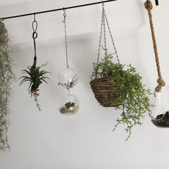 フェイクグリーン/雑貨だいすき/雑貨屋/プラントハンガー/雑貨/セリア/... テレビ上にぶらぶらさせている植物達。サボ…
