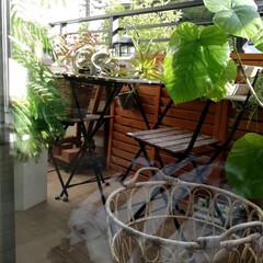 窓拭き/フェイクグリーン/ベランダガーデン/エバーフレッシュ/ウンベラータ/洗濯日和/... 今日の昼間にせっせと窓拭き。 取り込んだ…
