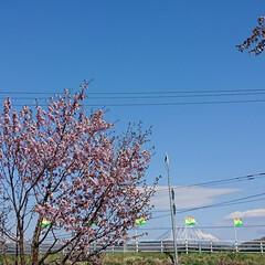 SAKURA/北海道も桜の季節🌸/桜/令和の一枚/フォロー大歓迎/GW/... 実家に日帰り帰省しました🚗  お天気も良…