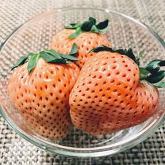 淡雪/苺/いちご/イチゴ/白い苺/白いイチゴ 淡雪という苺。初めて白い苺をいただきまし…