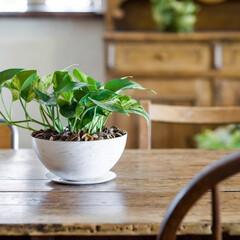 アンドホーム/andhome/インテリア/観葉植物/インドアグリーン/ディスプレイ/... 食卓の中心にグリーンがひと鉢あると、料理…
