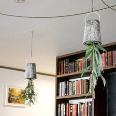 アンドホーム/andhome/インテリア/ハンギング/観葉植物/インドアグリーン/... 最近は、コンパクトで枝が垂れる植物が流行…