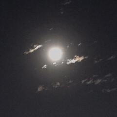 満月🌕 今夜は満月🌕 ビーバームーン!