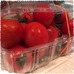 詰め放題/ミニトマト 最近高くて手が出せなかったミニトマト!近…