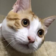 猫 キャットタワーで、何か獲物を見つけた模様☆
