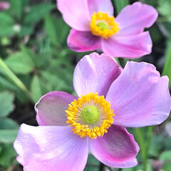 花/庭/住まい 庭に咲いた花。  この自然な色合いが好き☆