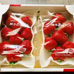 博多あまおう/いちご/スイーツ いちご祭り🍓🍓🍓♪。.:*・゜♪。. お…