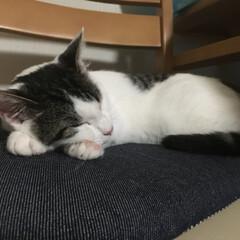 我が家の猫娘/ペット 日常あるある