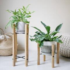 植物のある暮らし/グリーンのある暮らし/植物/グリーン/暮らしを整える/お洒落 グリーンを魅せて飾る  床に直置きにして…(1枚目)