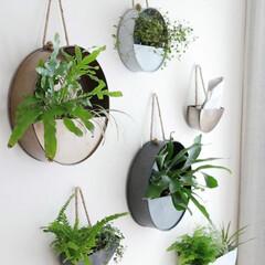 プランター/ウォールポケット/ブリキ/グリーンのある暮らし/観葉植物/グリーンインテリア/... グリーンのある暮らしをより豊かに!  レ…