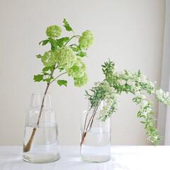 お花のある暮らし/花瓶/枝物/グリーンのある暮らし/植物のある暮らし/花のある暮らし/... 季節を感じる暮らしの始まりに  草木やお…
