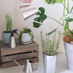 お気に入り/便利/ダルトン/DULTON/YAMAZAKI/セイラス/... *ミッテ ジョーロ*  癒しをくれる植物…