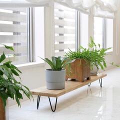 見せる収納/グリーンのある暮らし/おしゃれ空間/シェルフ/DIY/暮らしを整える/... インテリアにもなるローシェルフ  アイア…