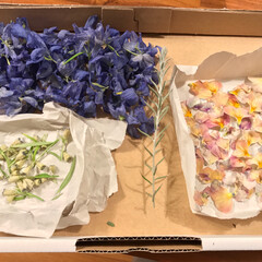 ドライフラワー 飾っていた花が乾燥しても綺麗な色だったの…