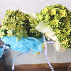 花が好き/紫陽花ドライ/紫陽花 母の日にもらった紫陽花さん。 青色から緑…