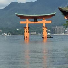 ごはん 夫婦で広島 穴子のお刺身は絶品です^^
