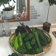 夏野菜/料理は楽しくなくちゃ 義父さんから頂いた朝積み夏野菜❤  あり…