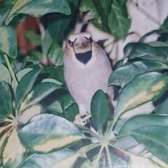 鳥🐤/懐かしの写真/想い出