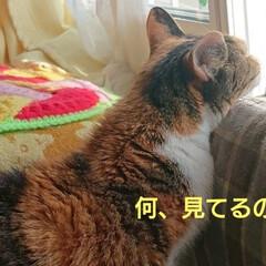 うちのモコ🐱/お昼寝/猫 病院から帰って来てからのお昼寝モコ🐱💤 …