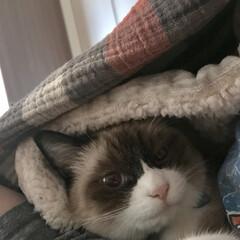たぬき猫/フォロー大歓迎/猫/にゃんこ同好会 寒いねー😵
