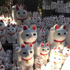 豪徳寺/猫神社/猫/にゃんこ同好会 今年の初詣はやっぱりここ!(1枚目)