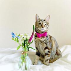 猫/ペット仲間募集/フォロー大歓迎/小動物/フェレット/ペット/... 【PR】  Bloomee LIFE 公…(3枚目)