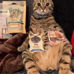 グリニーズ 猫用 ローストチキン味 156g マース オーラルケア 歯磨き キャットフード ペットフード キャット(おやつ)を使ったクチコミ「PEPPY.さんから スタッフ厳選うまう…」(7枚目)