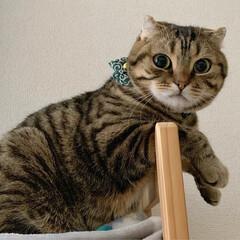 子猫/アメショ/アメリカンショートヘア/保護猫/小動物/フェレット/... みんなで集合にゃう~😸😸🐻 今日は、何を…(2枚目)