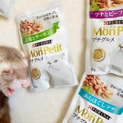 モンプチ プチグルメ ツナとビーフ 50gx6袋(その他ペット用品、生き物)を使ったクチコミ「昨日のおやつ会は モンプチでちょいリッチ…」(7枚目)