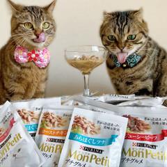 モンプチ プチグルメ ツナとビーフ 50gx6袋(その他ペット用品、生き物)を使ったクチコミ「昨日のおやつ会は モンプチでちょいリッチ…」(2枚目)