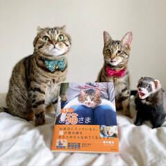 """雑誌/フェレット/小動物/エキゾチックアニマル/保護猫/子猫/... """"うちのお猫さま"""" 写真集に少し掲載して…(7枚目)"""