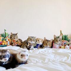 子猫/保護猫/スコティッシュフォールド/ベンガル/小動物/フェレット/... あけましておめでとうございます🎍🐓🎍 今…(1枚目)