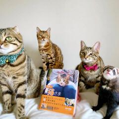 """雑誌/フェレット/小動物/エキゾチックアニマル/保護猫/子猫/... """"うちのお猫さま"""" 写真集に少し掲載して…"""