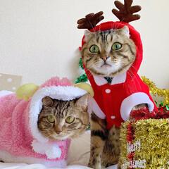 コスプレ/クリスマス雑貨/クリスマスツリー/トナカイ/サンタクロース/サンタコス/... 友子ちゃんとも、クリスマス撮影してたら、…(5枚目)