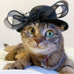 保護猫/スコティッシュフォールド/猫/ねこ/コレクション/帽子/... 今日の帽子は👒 黒色に致しますにゃ~ん😸…