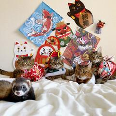 アメリカンショートヘア/多頭飼い/スコティッシュ/スコティッシュフォールド/ベンガル/子猫/... 🎍🌅お正月の家族写真🌅🎍 左後ろから 友…