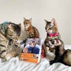 """雑誌/フェレット/小動物/エキゾチックアニマル/保護猫/子猫/... """"うちのお猫さま"""" 写真集に少し掲載して…(5枚目)"""