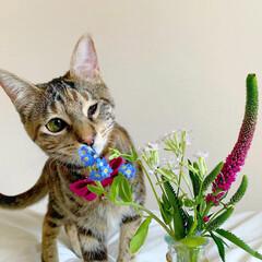 猫/ペット仲間募集/フォロー大歓迎/小動物/フェレット/ペット/... 【PR】  Bloomee LIFE 公…