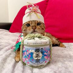 鏡餅/櫻正宗/日本酒/ベンガルキャット/ベンガル/大晦日/... まだ始めたばかりだけど、フォローしてくれ…