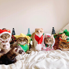 ペットと暮らす家「house-zoo」/リミアペット同好会/リミアペット/アメリカンショートヘア/スコティッシュフォールド/ベンガル/... 💕🎁🎄 MerryX'mas 🎄🎁💕 記…(4枚目)