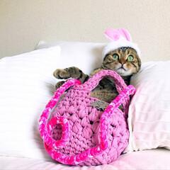 丸洗い/フェレット/編み物/ショルダーバッグ/ハンドバッグ/うさぎ/... ズパゲッティの糸を使い、春らしいカラーの…